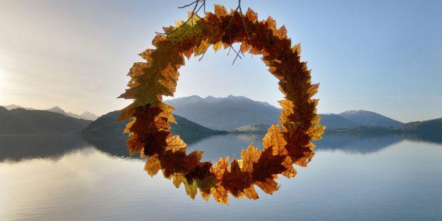 autumn-leaf-cycle-martin_hill